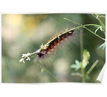 Hang in There Fuzzy Caterpillar 3 Poster