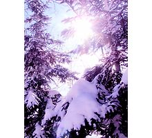 Mauve winter  Photographic Print