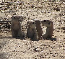 Baby Round-tailed Ground Squirrel Family by Ingasi
