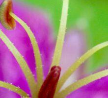 Macro Purple Wild Flower 1 Sticker