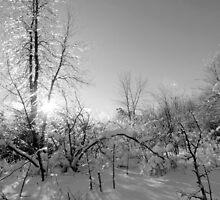 Winter surprises by francelal
