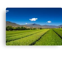 Tea in the Valley Canvas Print