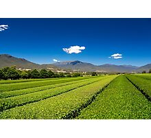 Tea in the Valley Photographic Print