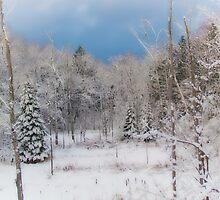 Winter landscape by francelal