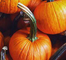 Fall Pumpkins Sticker
