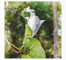 Unfolding beauty of a Butterfly tree flower One Piece - Short Sleeve