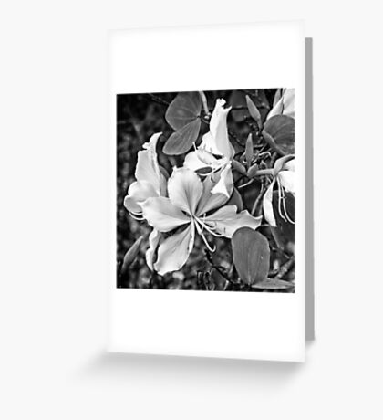 Exquisite beauty of a Butterfly tree flower Greeting Card
