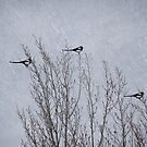 3 Magpies by Lynn Starner