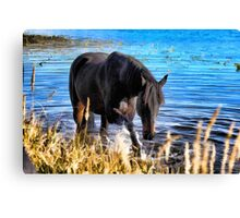 Percheron Thoroughbred Horse Artwork Canvas Print