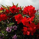 Scarlet Beauties Blowing in the Wind by kathrynsgallery
