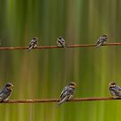 birds on the wire by ketut suwitra