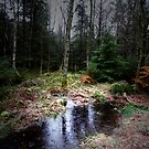 THE FOREST by leonie7