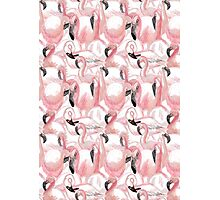 All the Flamingos - Pattern Photographic Print