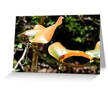 New growth along the Gondwana Rainforest Walk Greeting Card