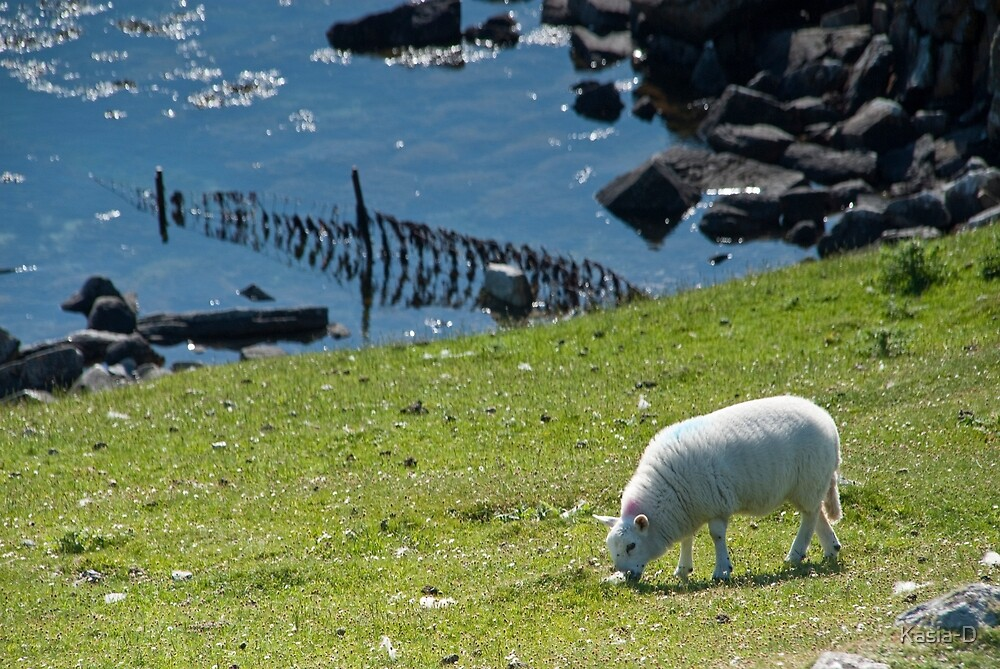 North Uist: Sheep in Paradise by Kasia-D
