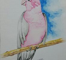 Flaming Galah - For Sarah by Picatso