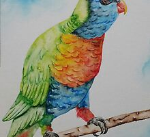 Rainbow Lorekeet - For Amy by Picatso