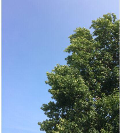 Tree in the Sky Sticker