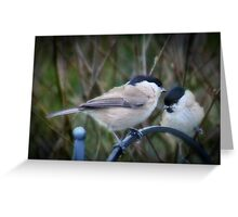 Black cap conflab Greeting Card