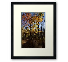 Of Fall and Fallen Giants - Autumn Forest in the Sunshine Framed Print