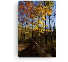 Of Fall and Fallen Giants - Autumn Forest in the Sunshine Canvas Print