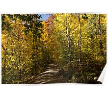 Sun Dappled Autumn Path - Enjoying a Sunny Forest Walk Poster