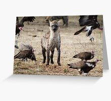 Spotted Hyena, South Luangwa National Park, Zambia Greeting Card