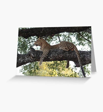 Leopard, South Luangwa National Park, Zambia Greeting Card