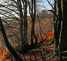 Woodland by Andrew Jeffries