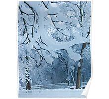 Frozen Winter Trees Poster