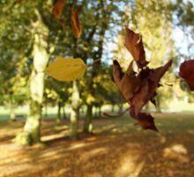 Falling Leaves in Autumn Sticker