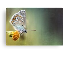 Composition in other colors....  Canvas Print