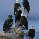 STOCK ~ Amongst Friends ~ Homer, Alaska by akaurora