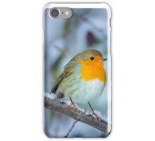 A robin in winter iPhone Case/Skin