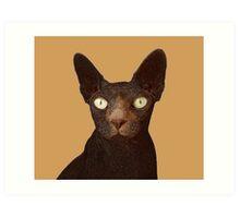 Sphynx Cat With Yellow Eyes Art Print