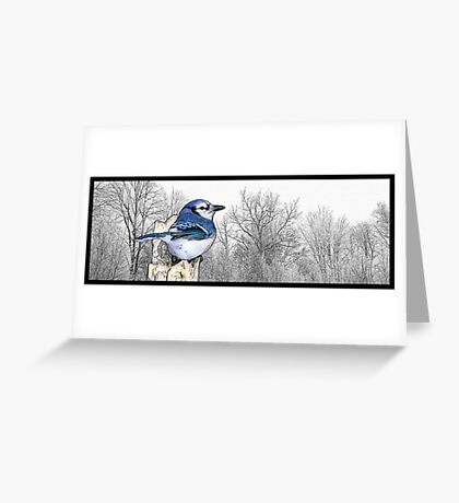 Blue Jay Drawing Greeting Card