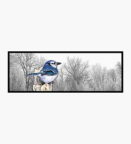 Blue Jay Drawing Photographic Print