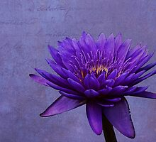 Purple Passion by Judy Vincent