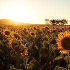 In Golden Fields by Kristin Repsher