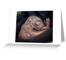 Baby Squirrel Dream Greeting Card