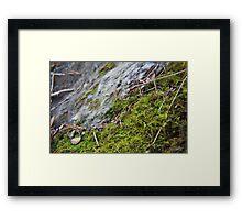 Macro Moss Framed Print