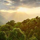 Tree Top Dawn, Dorrigo National Park, New South Wales, Australia by Michael Boniwell