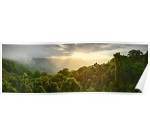 Tree Top Dawn, Dorrigo National Park, New South Wales, Australia Poster
