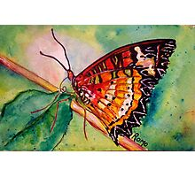 Butterfly Song Photographic Print