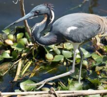 Tricolored Heron Sticker