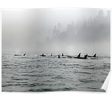Passing Whales Poster