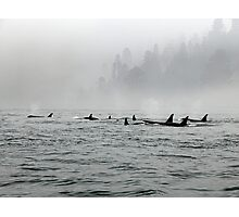 Passing Whales Photographic Print