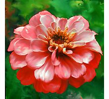 Bright Orange Zinnia Painting  Photographic Print