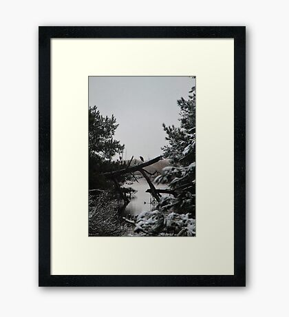 Snowy Heron Perched on Log - Assateague, MD Framed Print