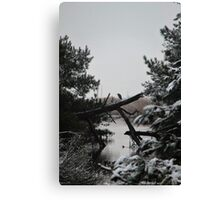 Snowy Heron Perched on Log - Assateague, MD Canvas Print